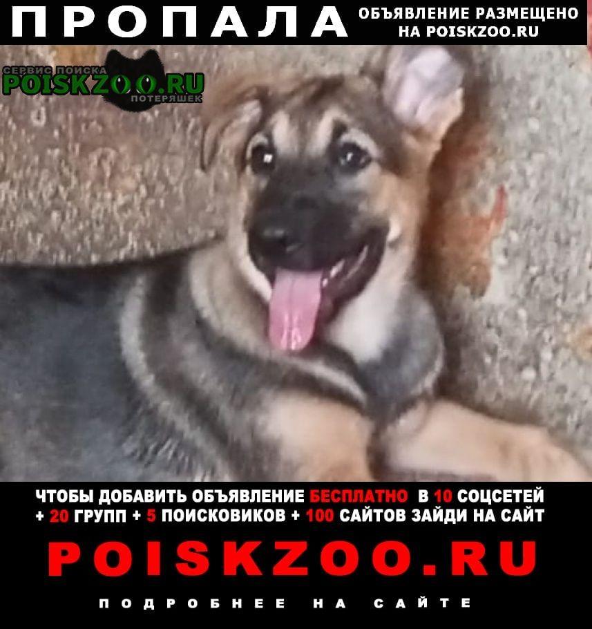 Пропала собака щенок, м.бибирево, алтуфьево Москва