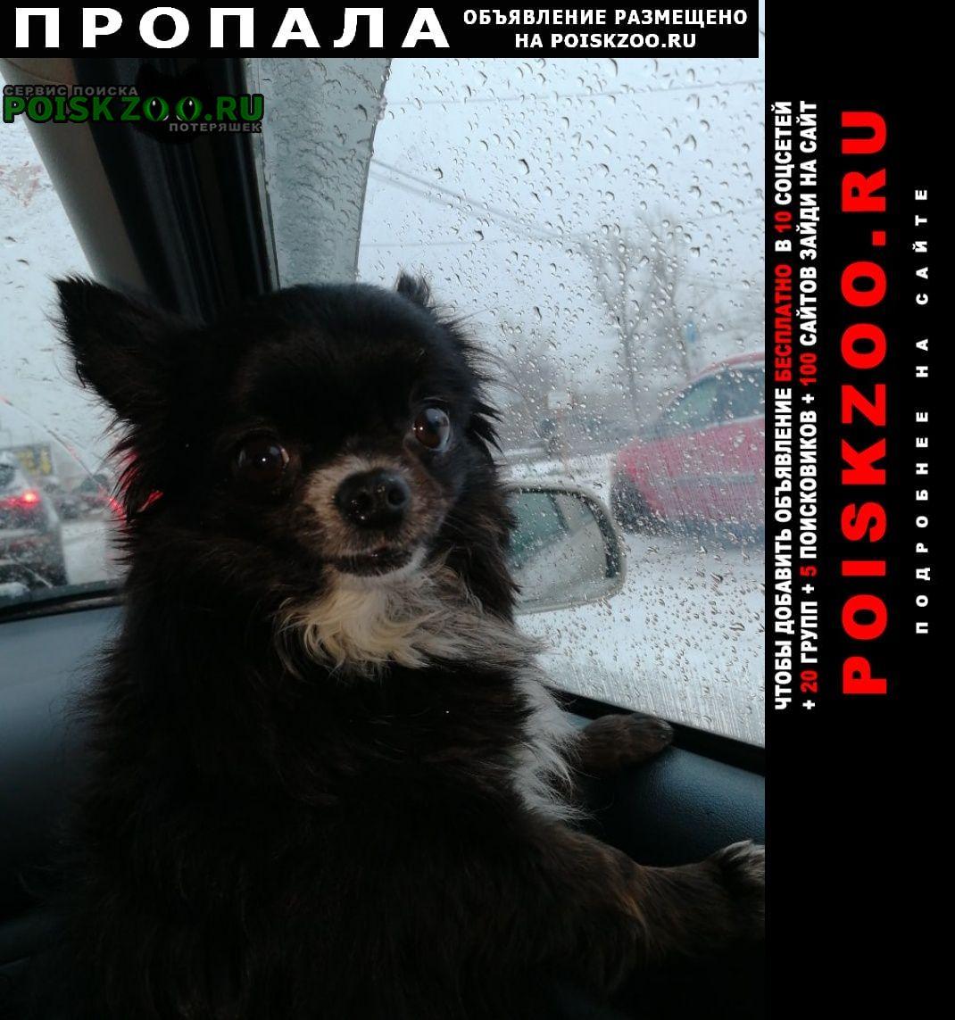 Пропала собака кобель в диево-городище Ярославль