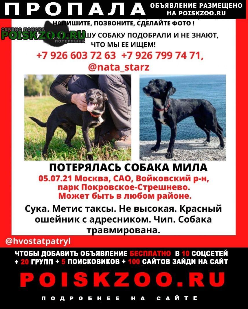 Пропала собака сао и сзао Москва