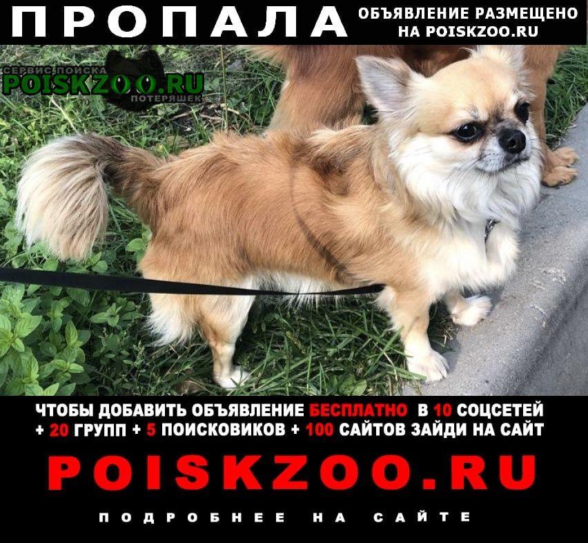 Пропала собака кобель Нахабино
