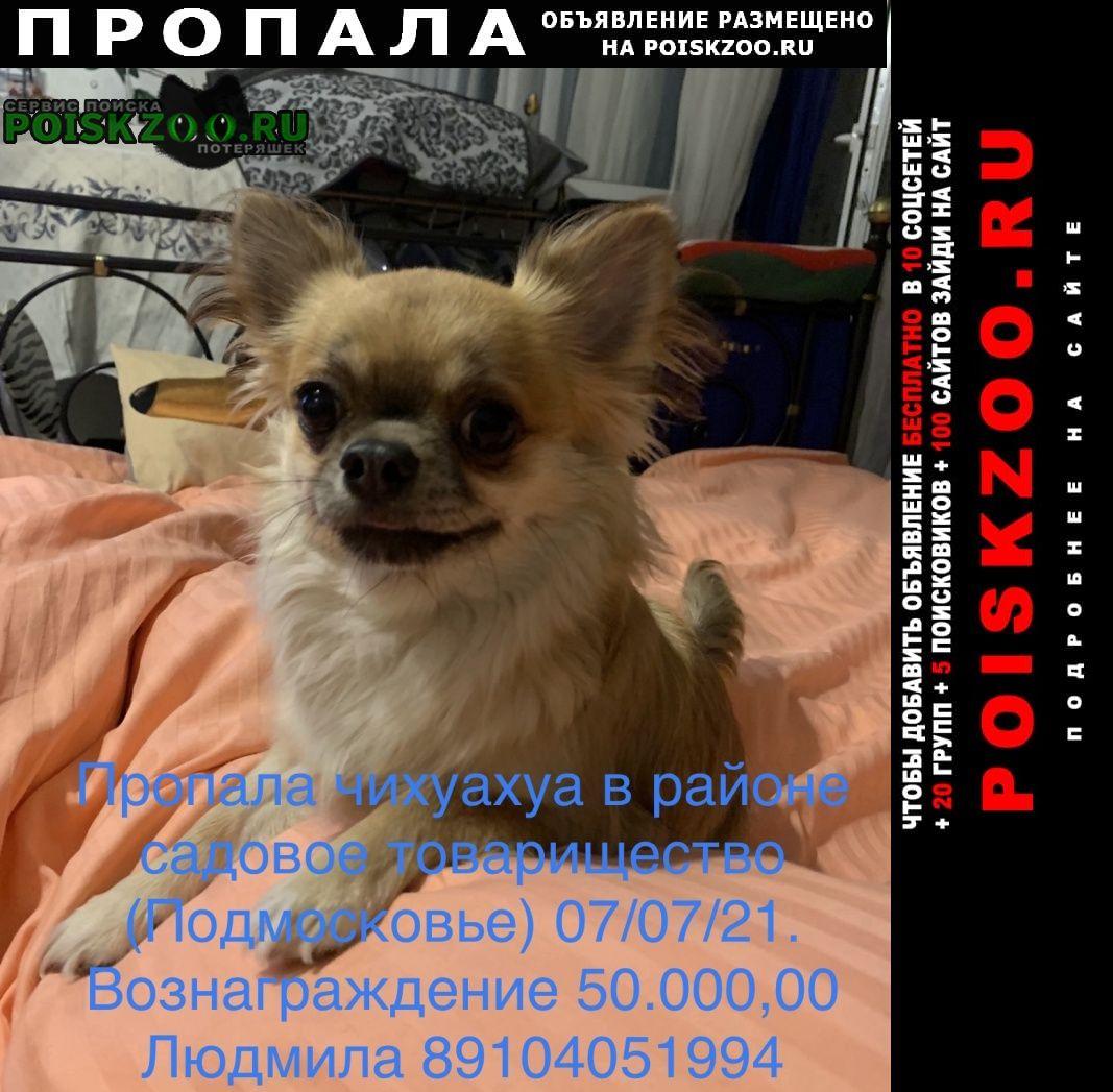 Пропала собака кобель 50.000, 00 вознаграждение Москва