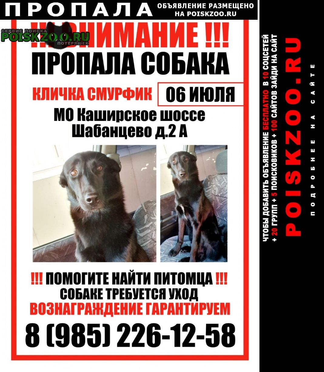 Пропала собака кобель песик напуган сбежал. Москва