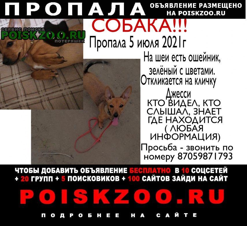 Пропала собака Павлодар