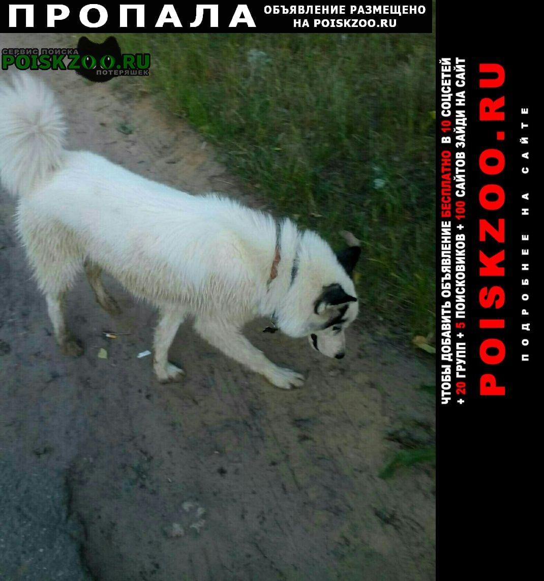 Пропала собака хаски в 2019 году Нижний Новгород