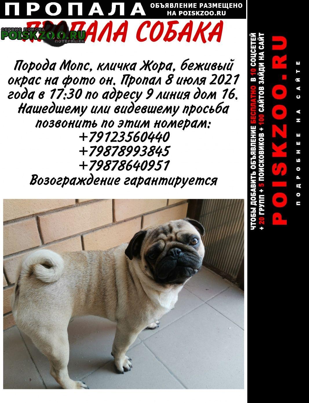 Пропала собака кобель прошу любая информация Оренбург
