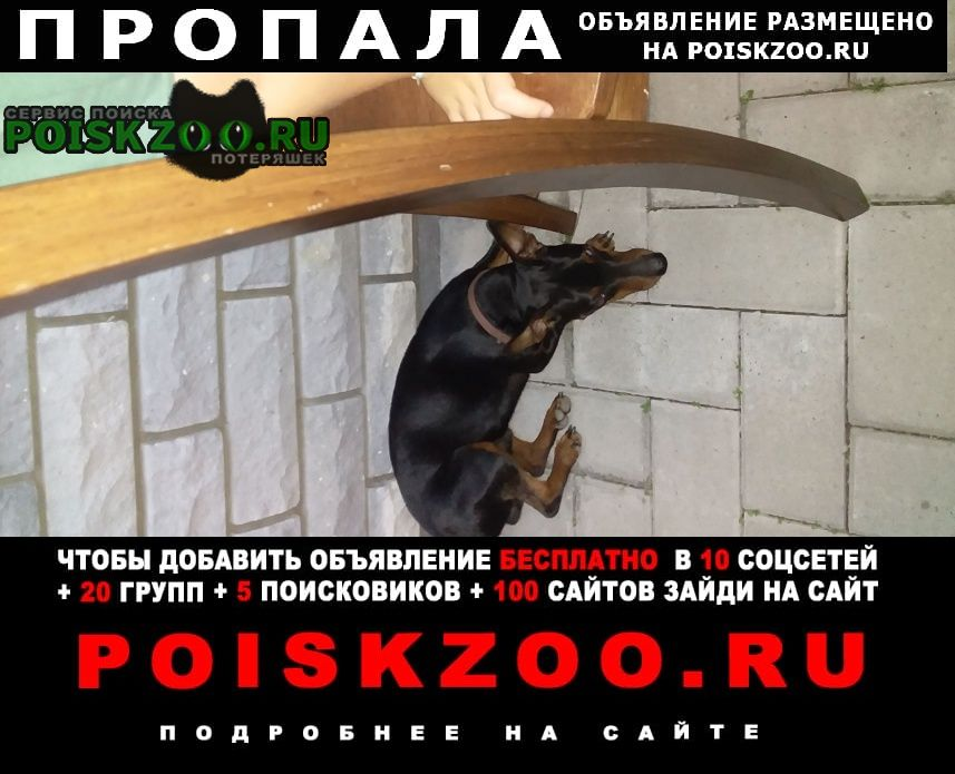 Пропала собака кобель Нарофоминск
