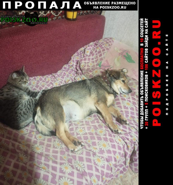 Пропала собака может быть у трассы или в поселке рядом Челябинск