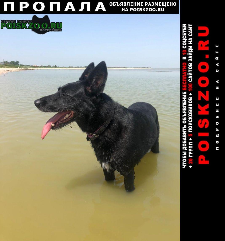 Пропала собака около д. санино Киржач