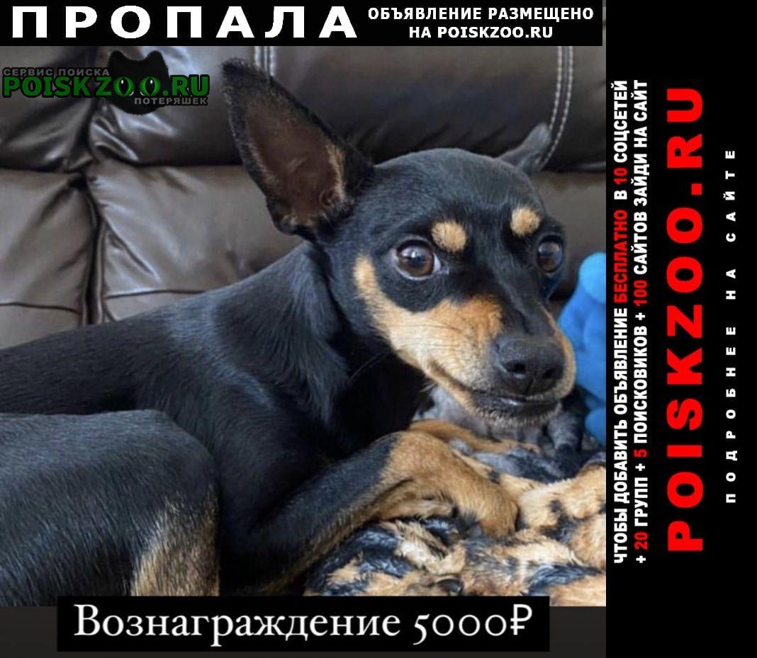 Пропала собака придержите если кто увидит вознагражден Ставрополь