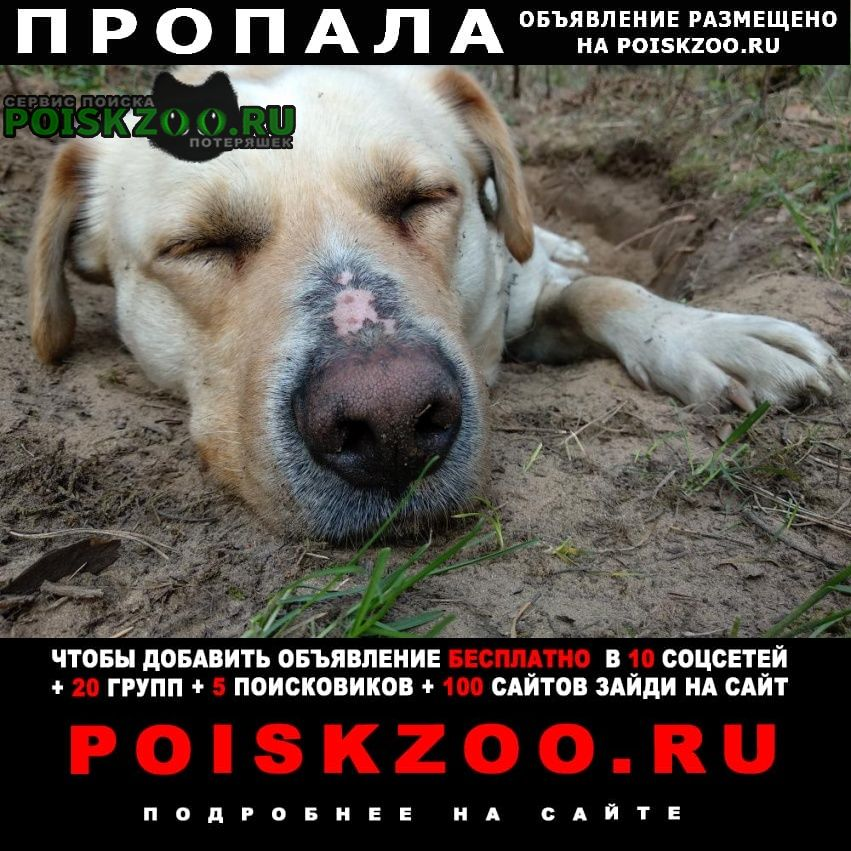 Пропала собака кобель Казань