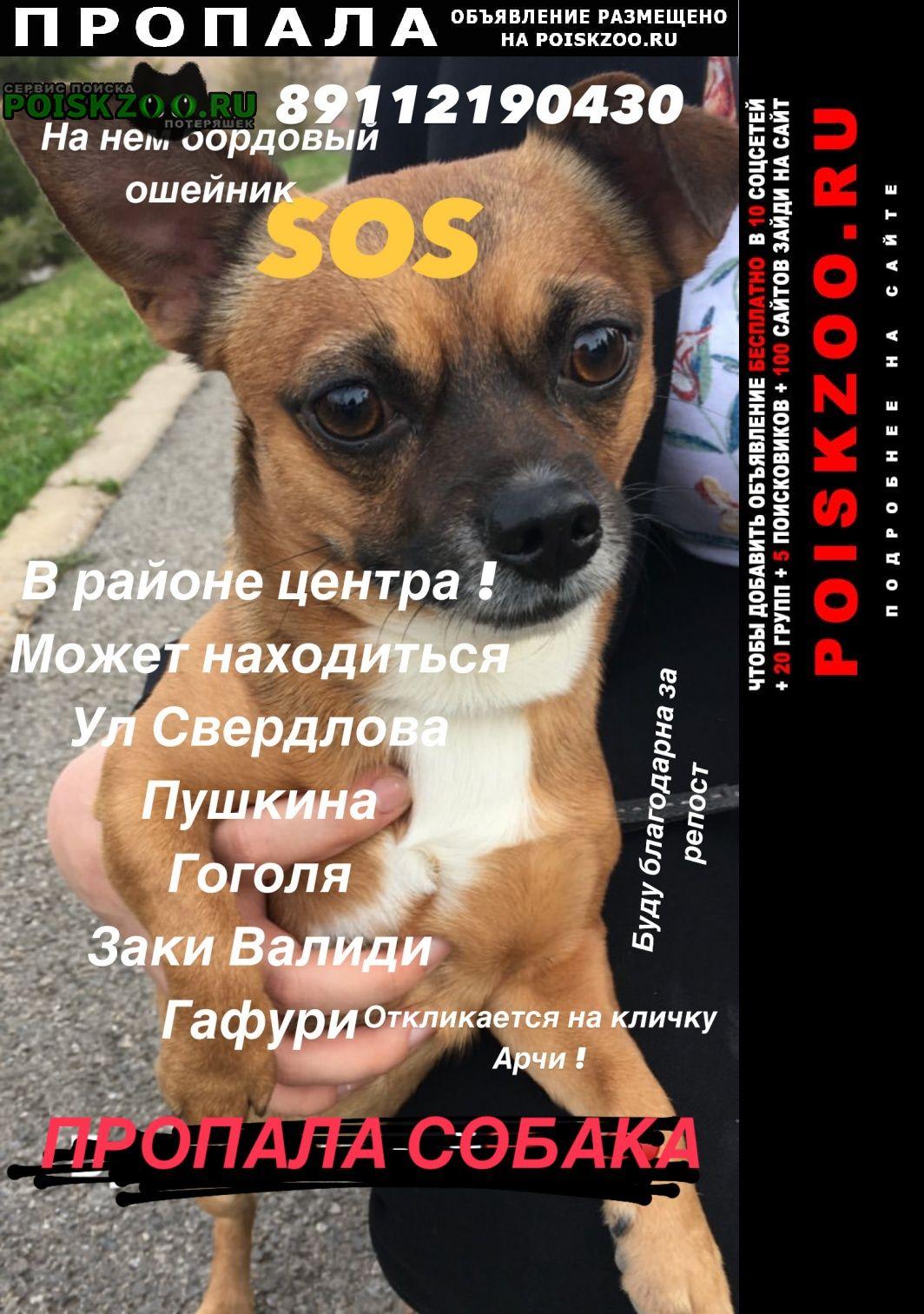 Пропала собака кобель помогите найти в центре города Уфа