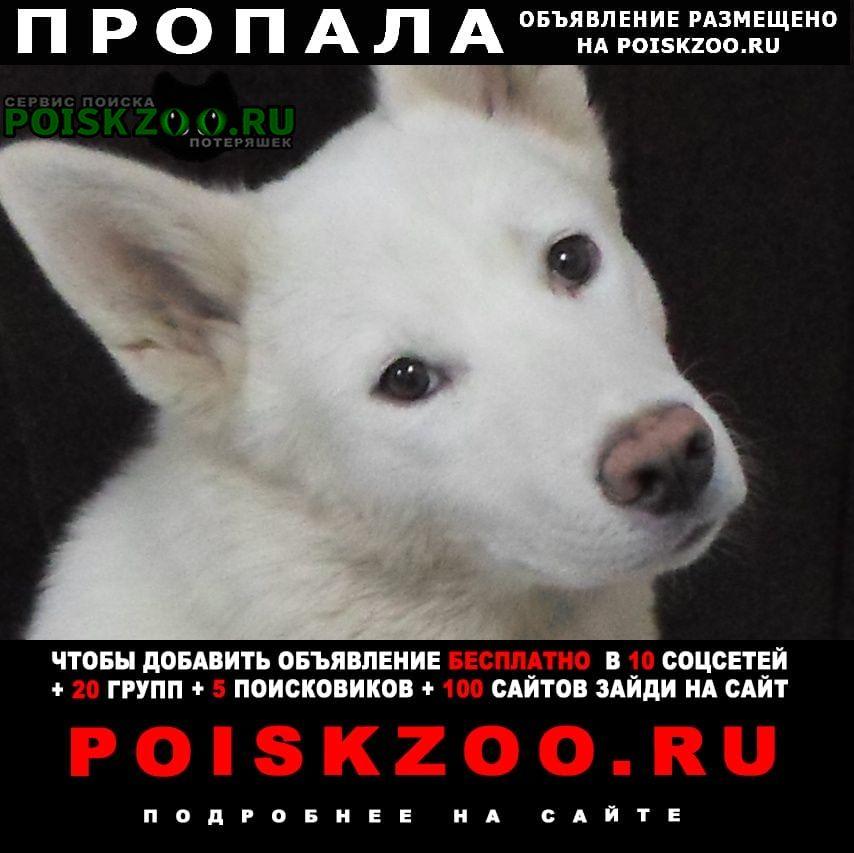 Пропала собака кобель Самара