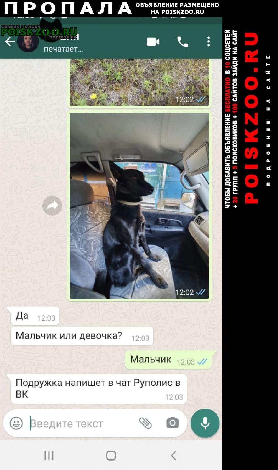 Пропала собака кобель сбежал испугался перелёта Домодедово
