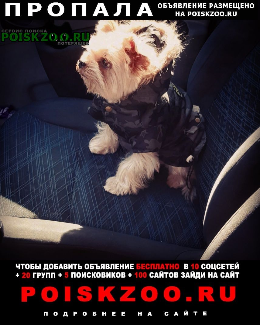 Пропала собака кобель Калининград (Кенигсберг)