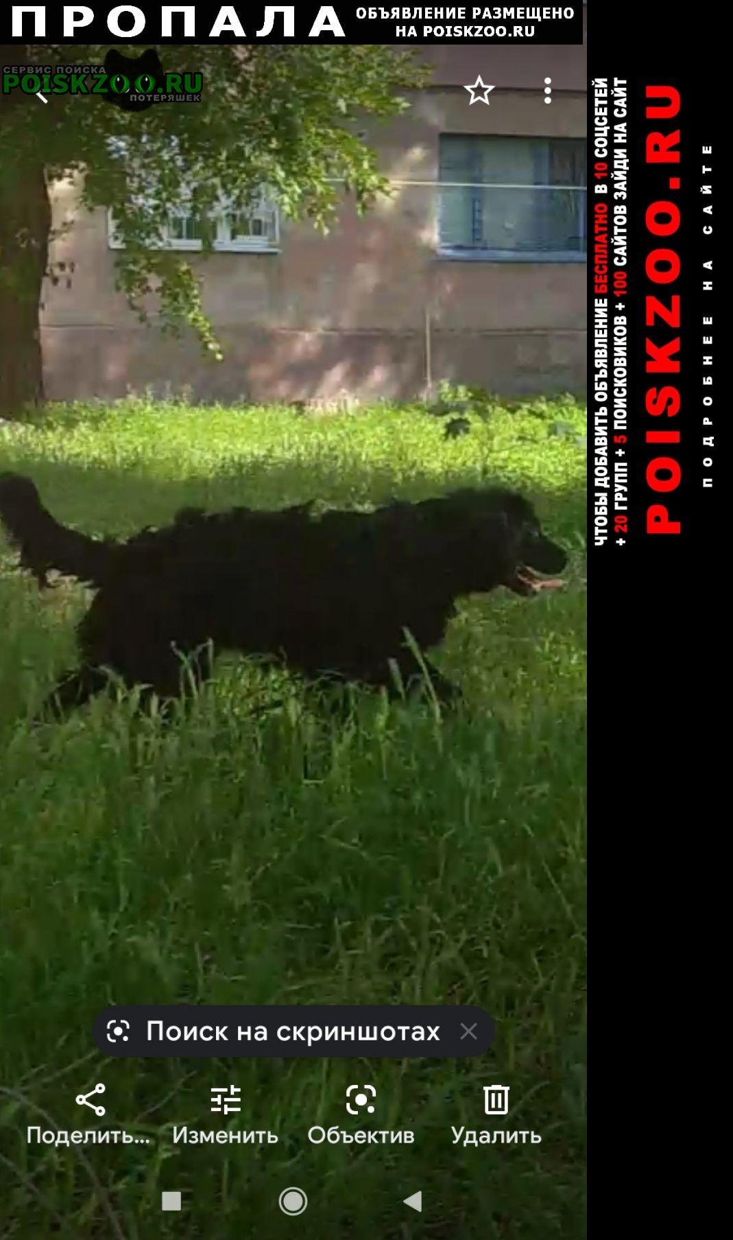 Пропала собака кобель Мариуполь