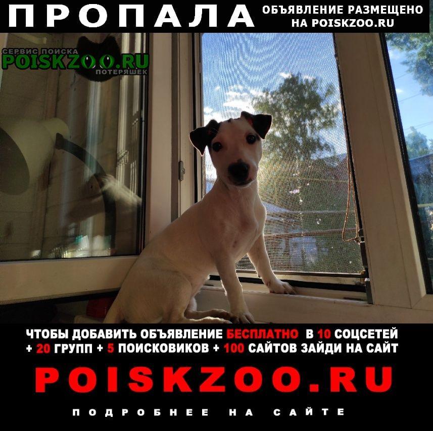 Пропала собака 9 июля 2021 Суздаль
