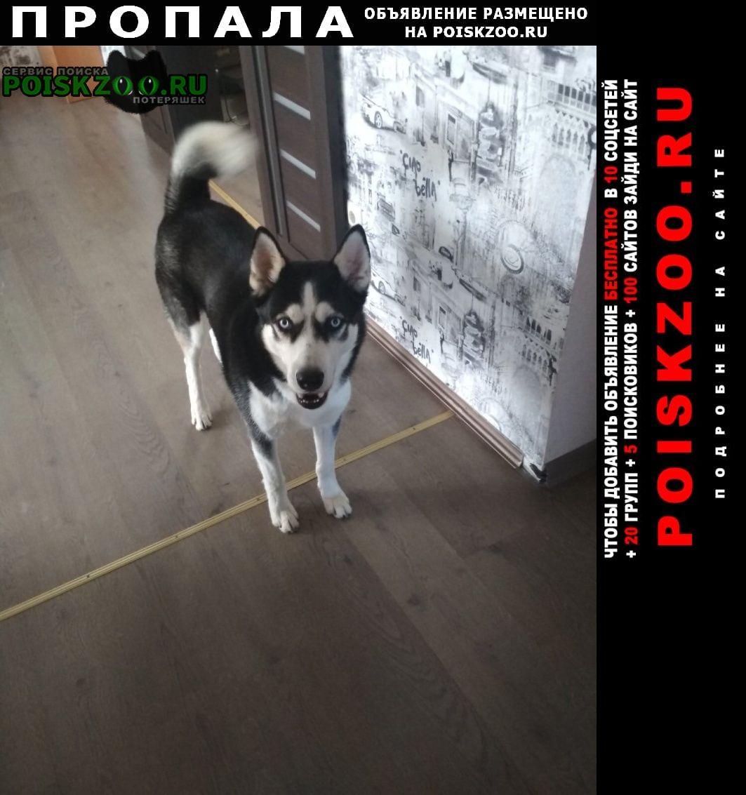 Пропала собака кобель хаски Севастополь