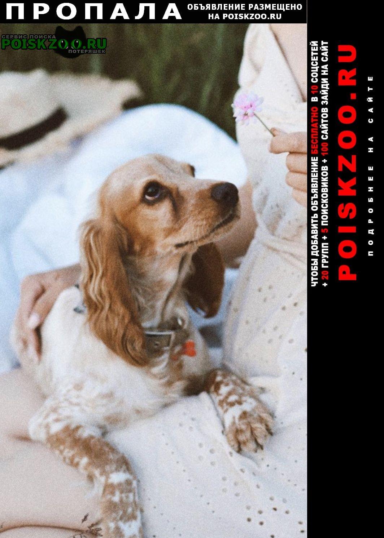Пропала собака вознаграждение Тольятти