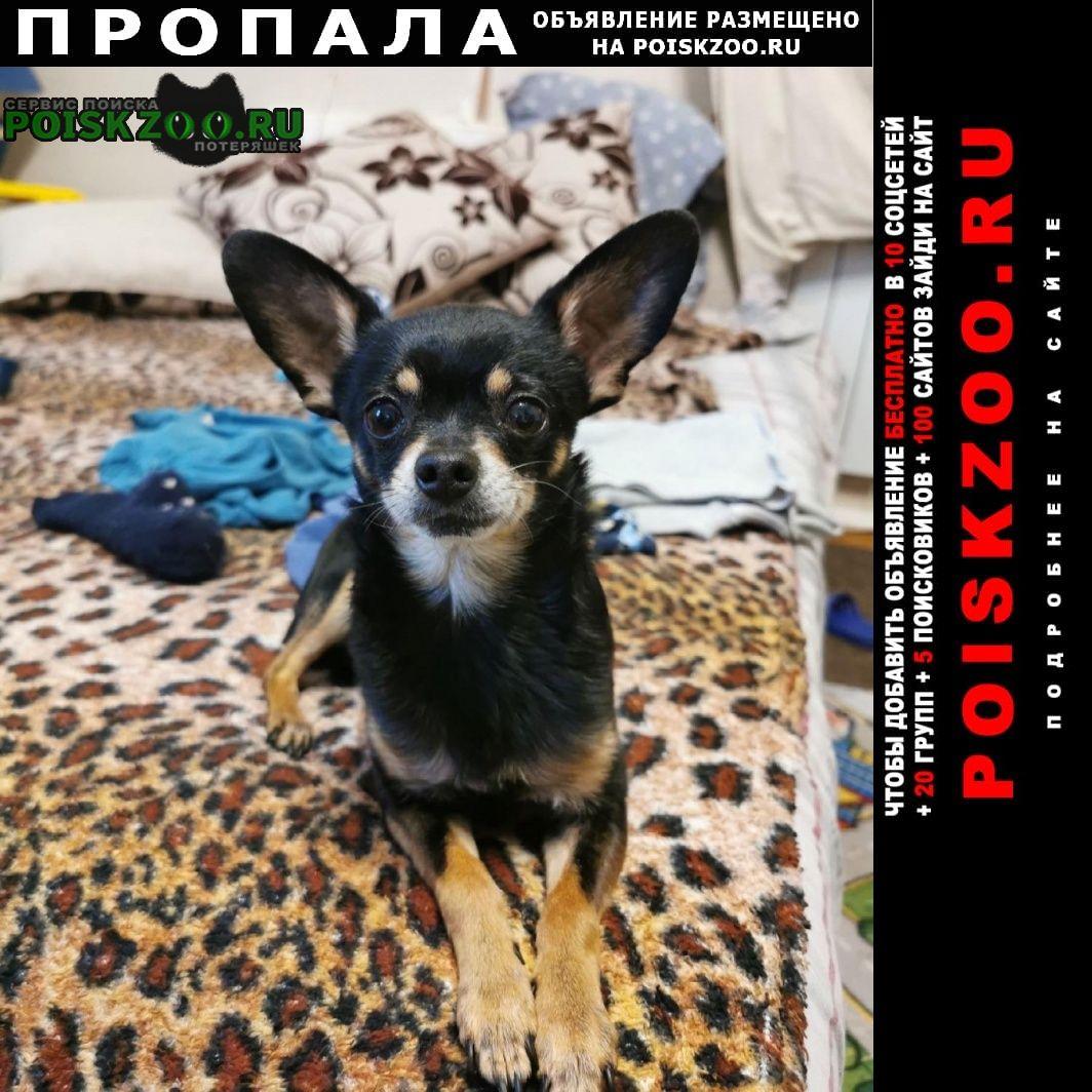 Пропала собака кобель sos Пермь