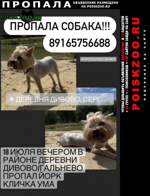 Пропала собака Сергиев Посад
