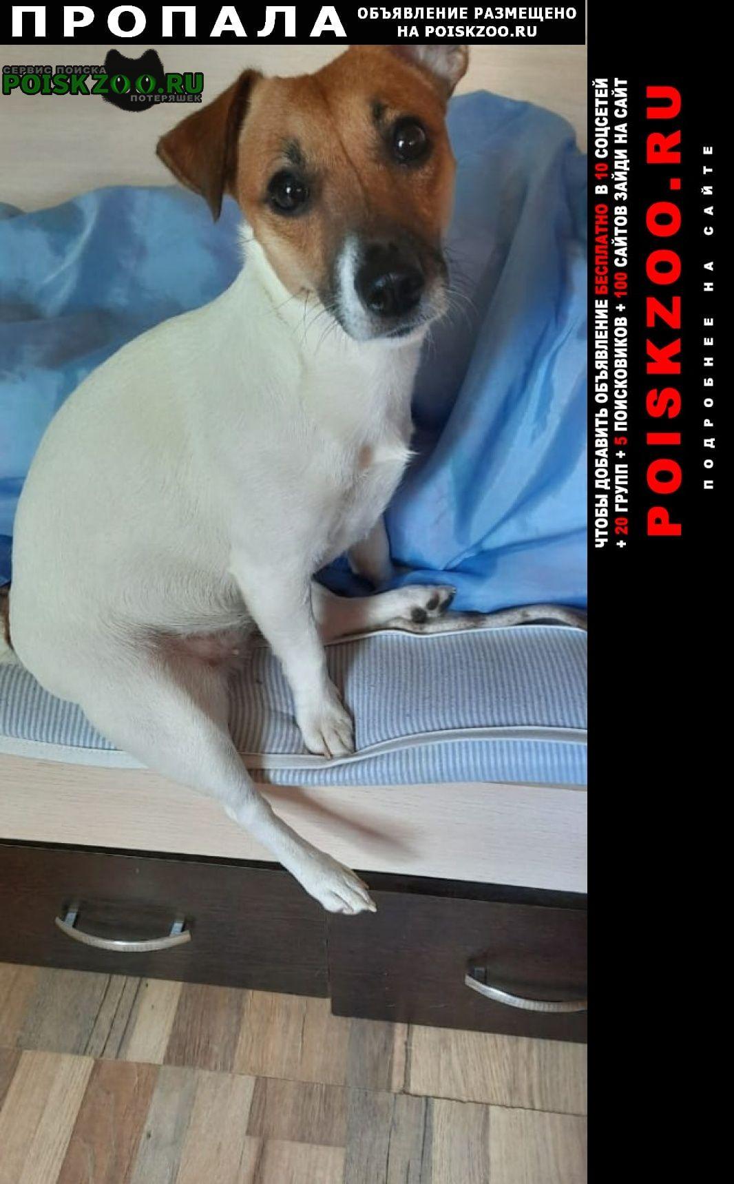 Пропала собака джек рассел девочка Москва