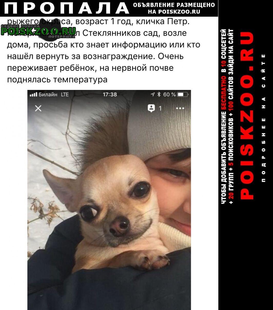 Пропала собака кобель Калуга