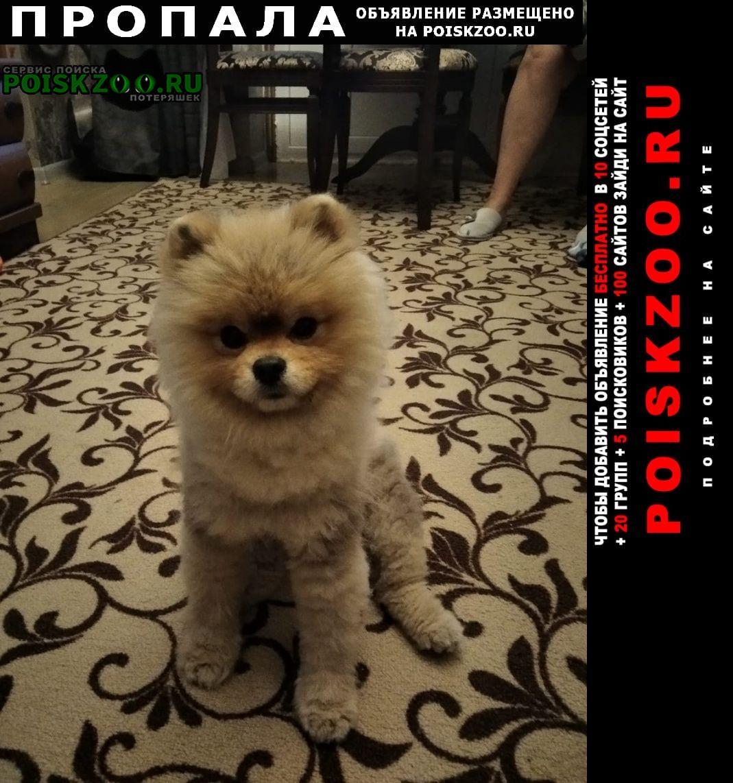 Пропала собака кобель померанский шпиц, Новороссийск