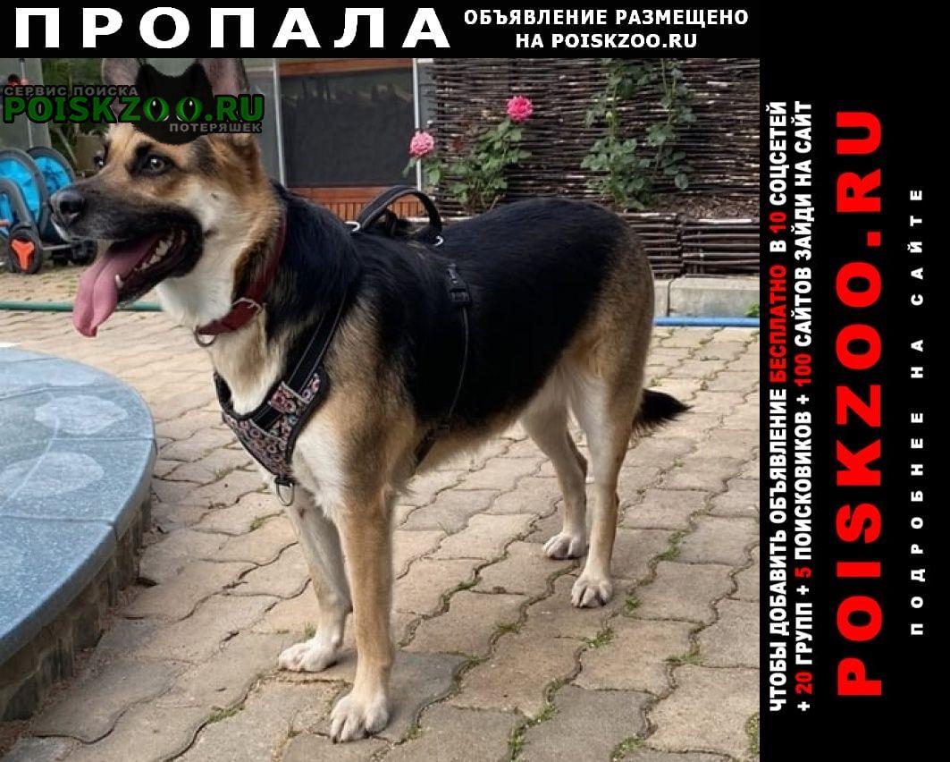 Пропала собака потерялась найда Шлиссельбург