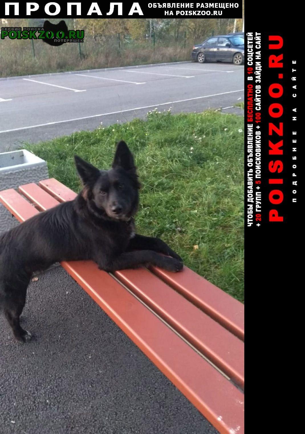 Пропала собака кобель чёрный большой пёс Всеволожск