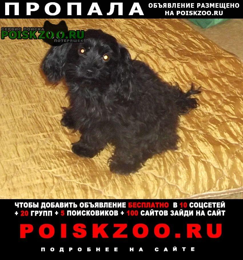 Пропала собака кобель черная собака по кличке митя Подольск