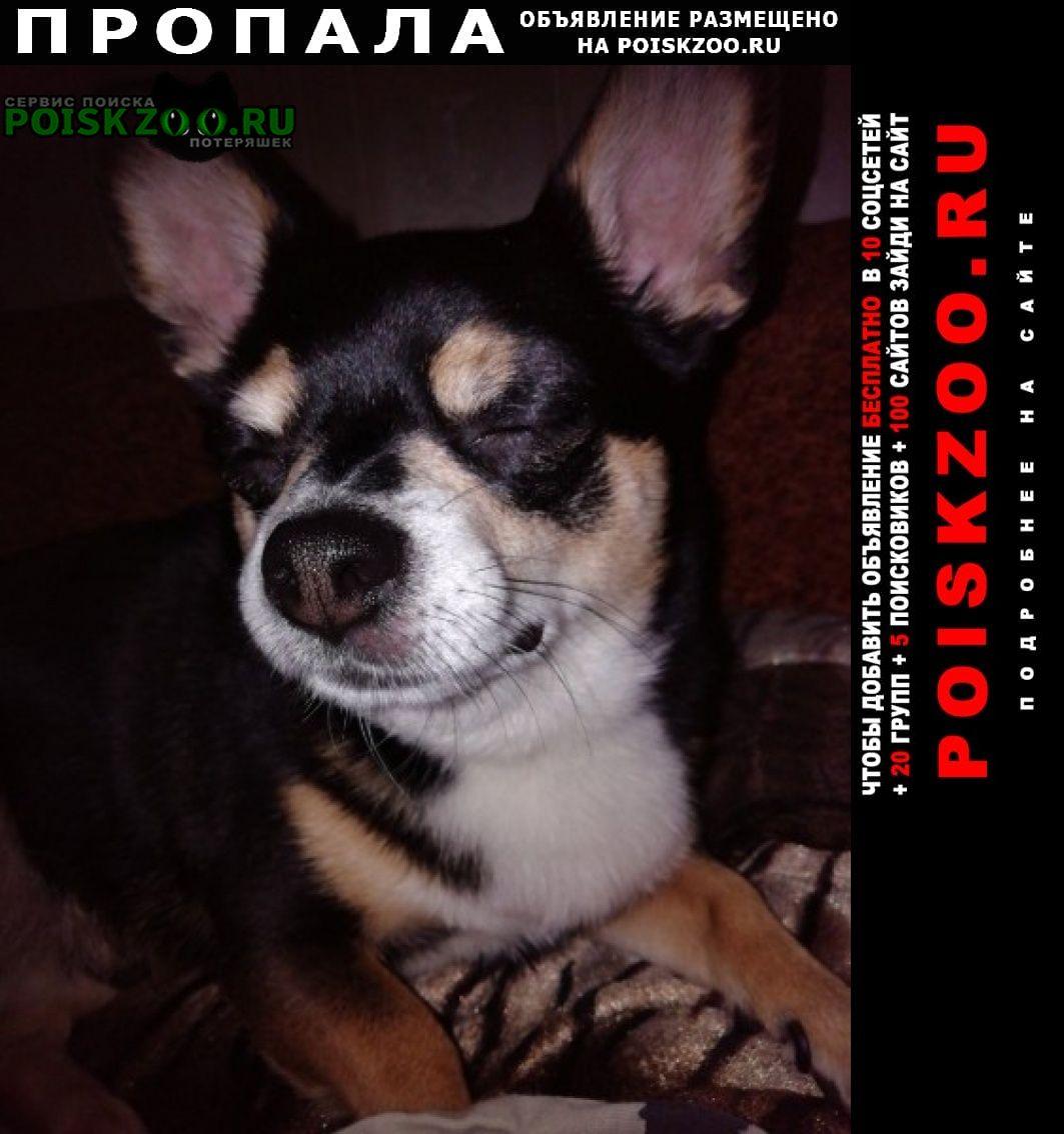Пропала собака кобель чип кабель черный чихуахуа в районе ме Санкт-Петербург
