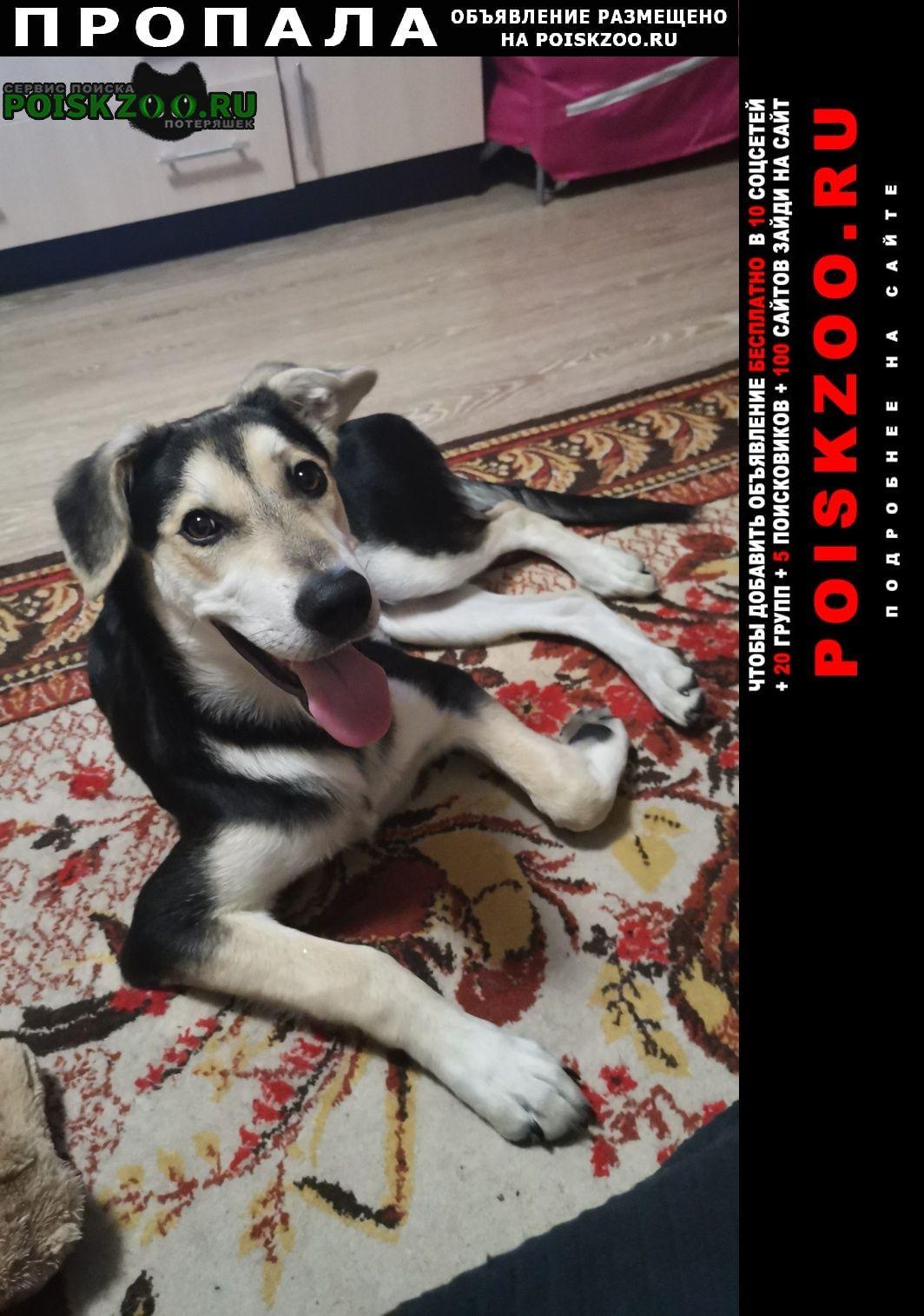 Пропала собака кобель пёс чаки 6 месяцев Москва