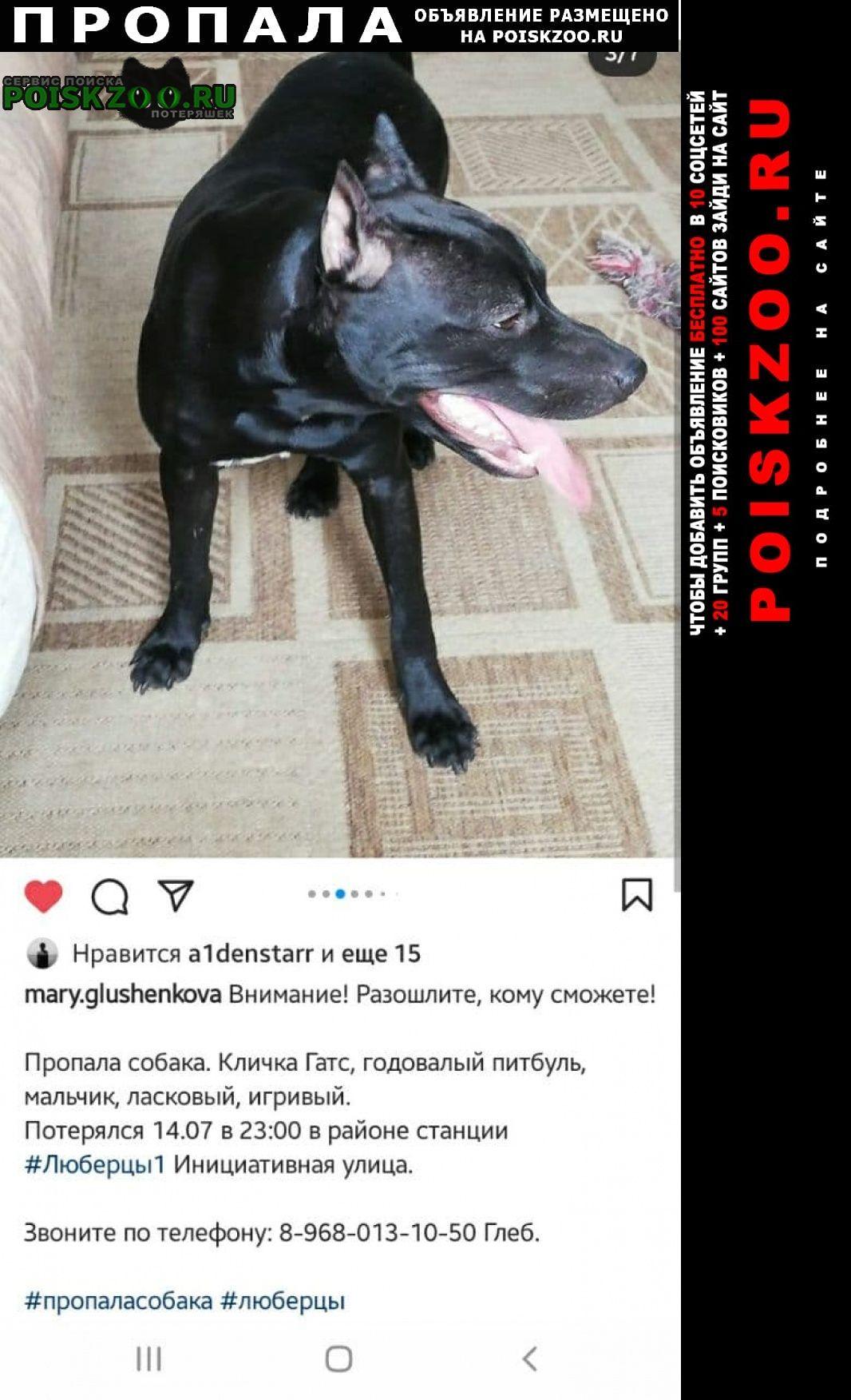 Пропала собака кобель кличка гатс, черный питбуль, 1 год Люберцы