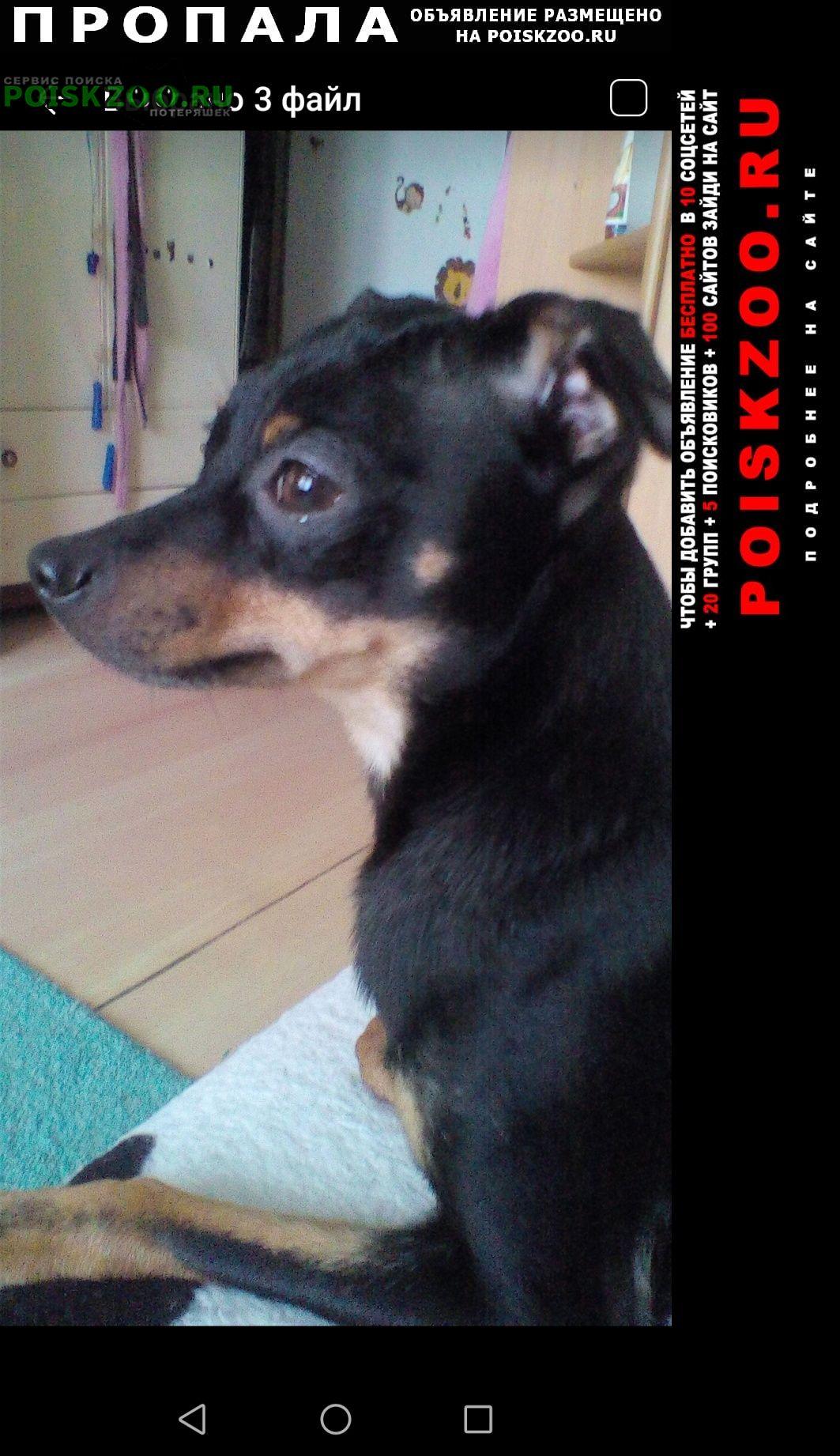 Пропала собака кобель пожалуйста верните моего мальчика Муром