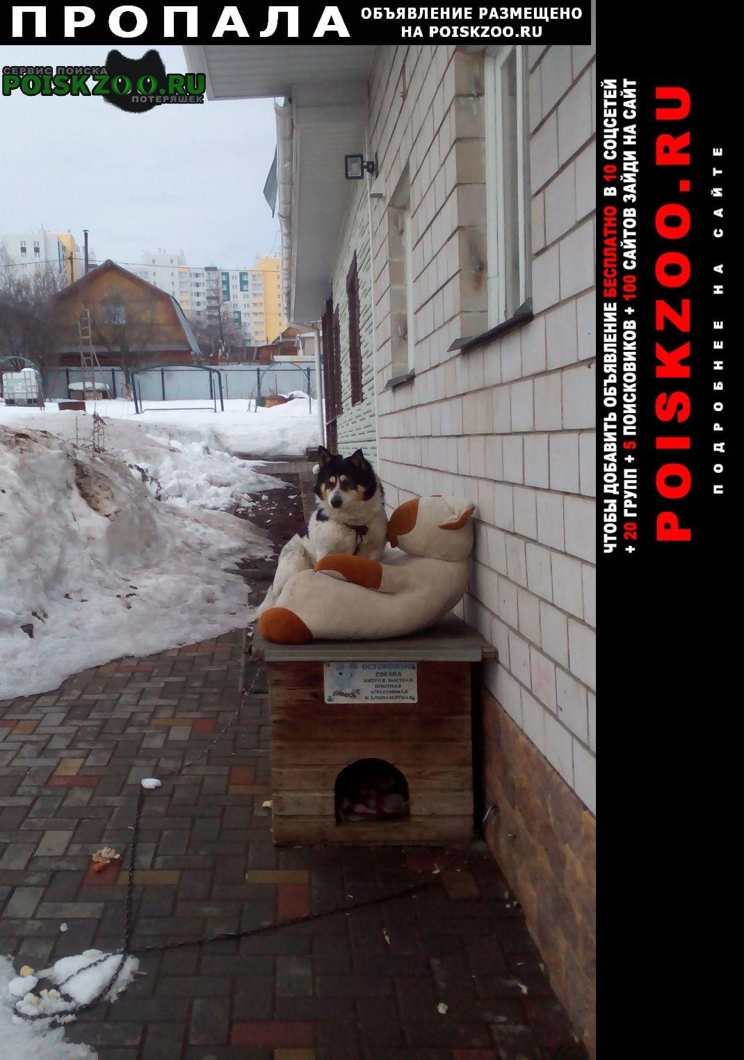 Пропала собака кобель Ижевск