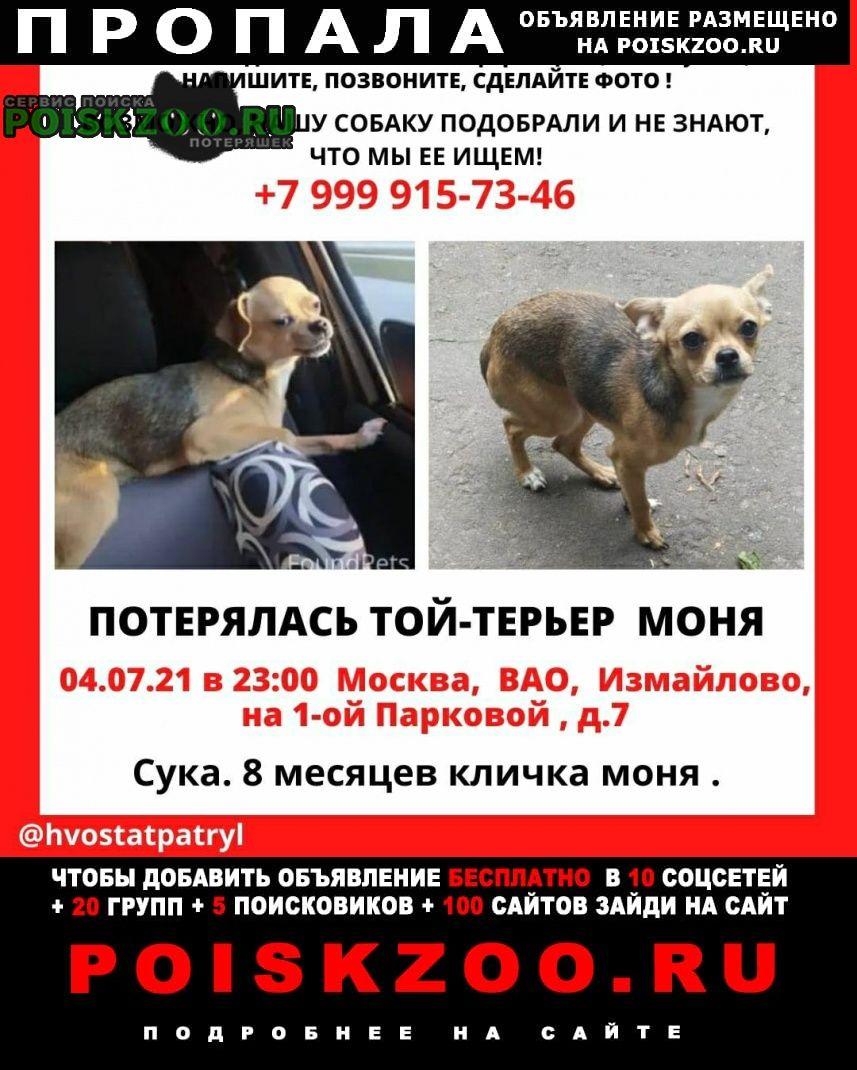 Пропала собака кличка:моня. Москва
