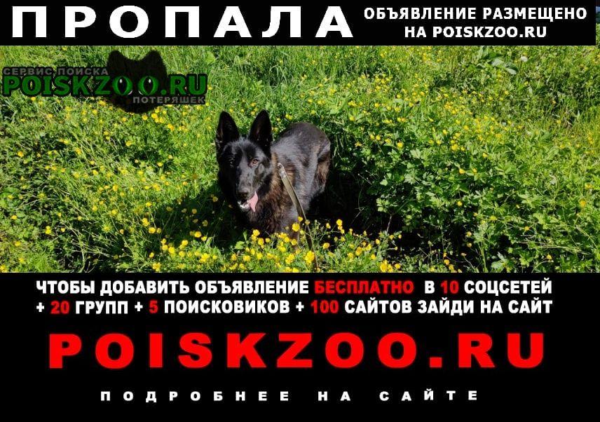 Пропала собака, мкр никольско-архангельский Балашиха