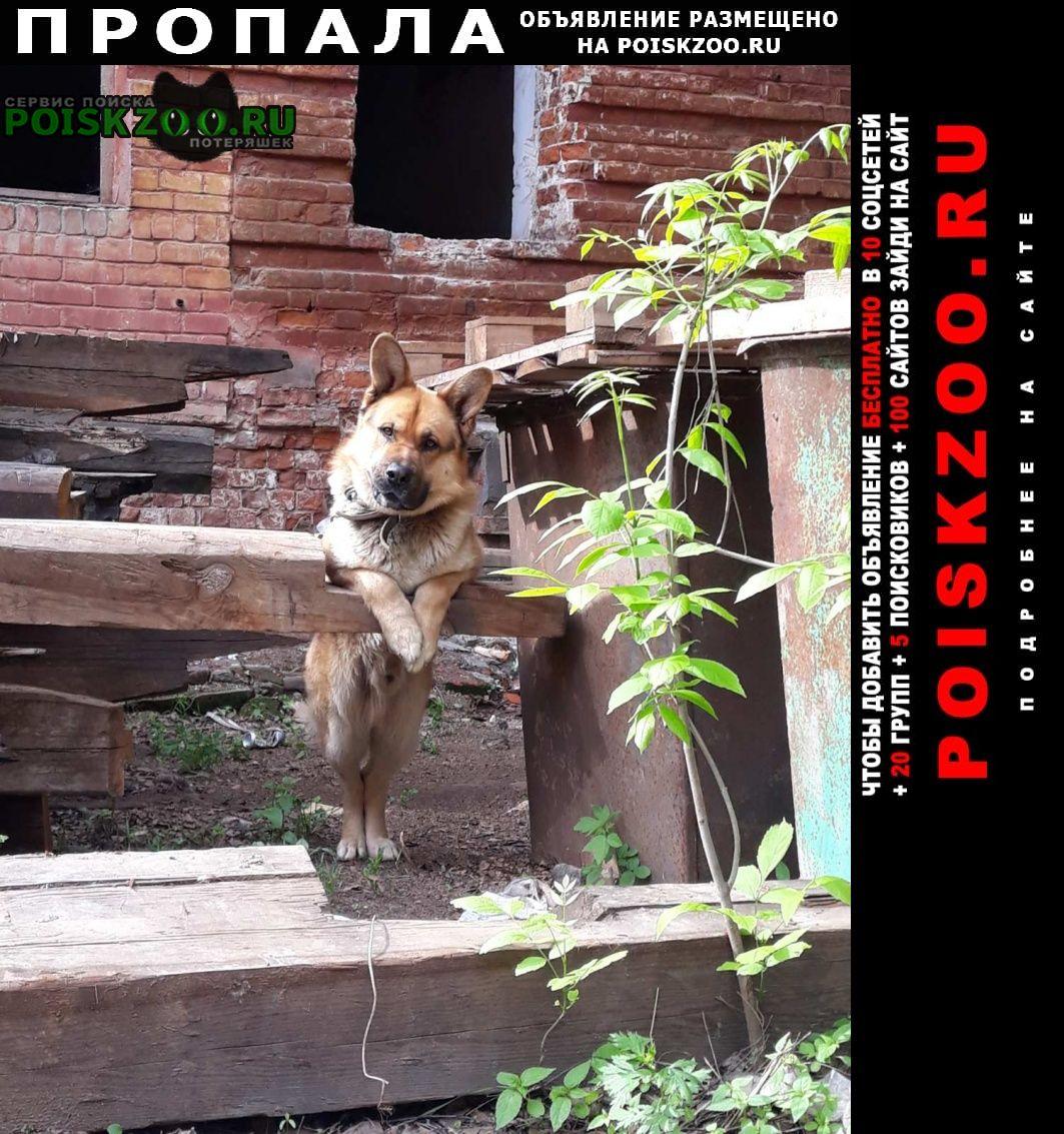 Пропала собака кобель овчарка. Нижний Новгород
