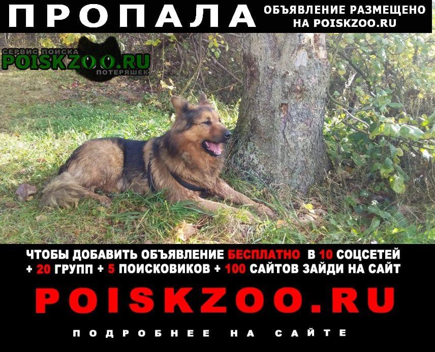Пропала собака кобель, рыже-черный Сергиев Посад