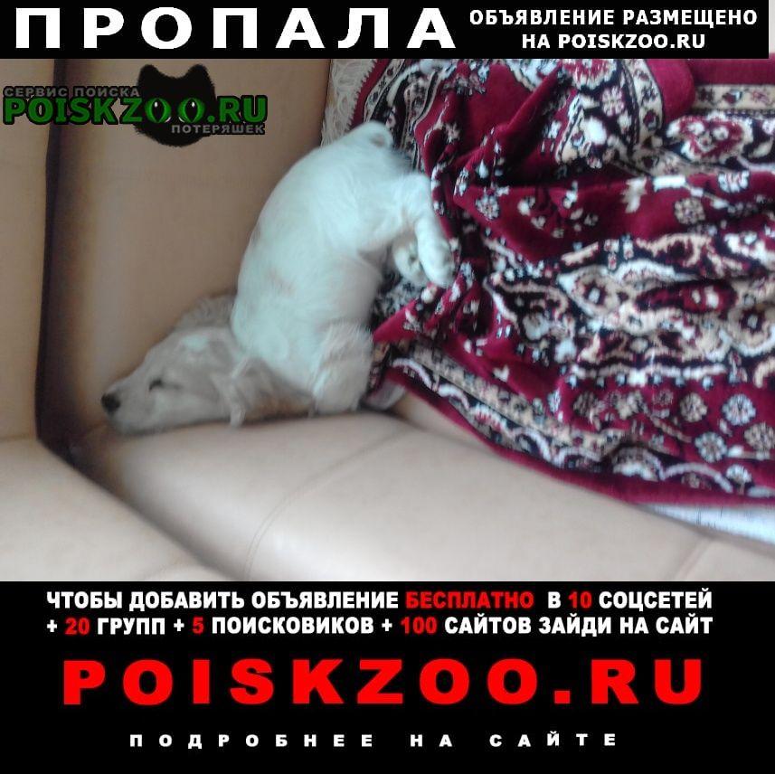 Пропала собака кобель щенок кокер спаниеля Феодосия