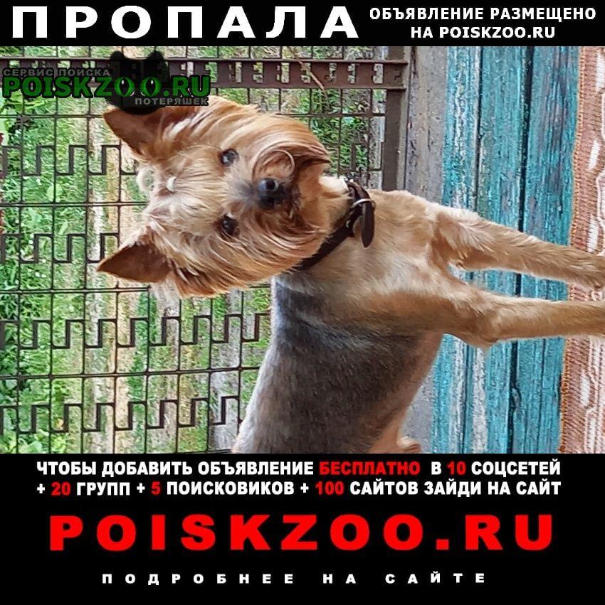Пропала собака кобель ая область, добровский район, капи Липецк