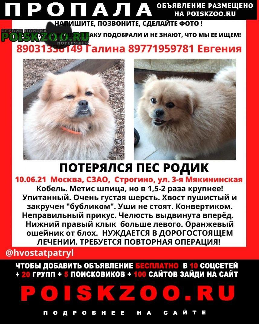 Пропала собака продолжаем поиски Москва