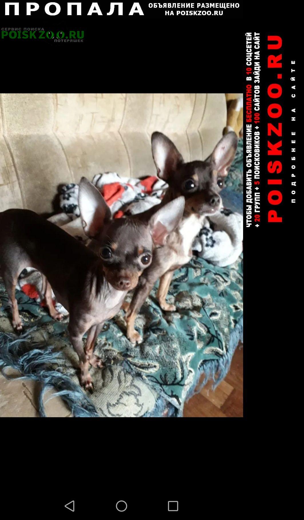Пропала собака той терьер мама и дочка Астрахань