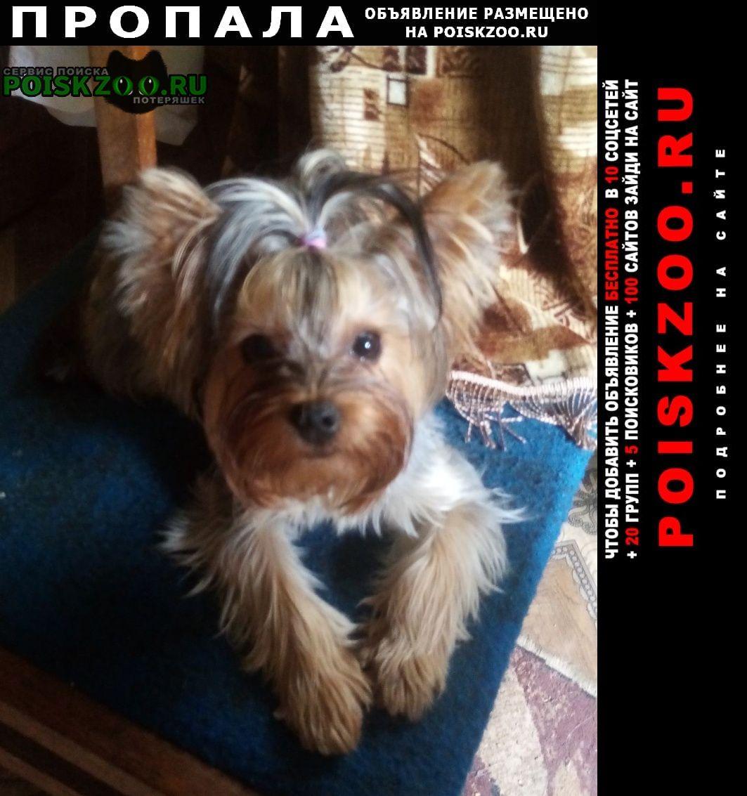 Пропала собака Черкассы