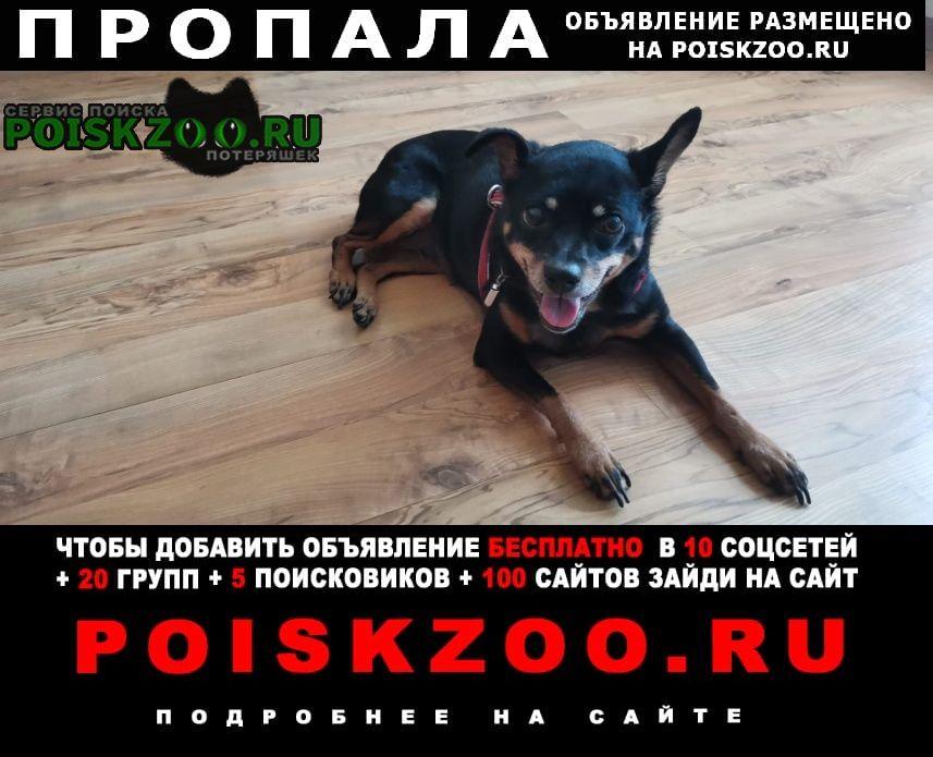 Пропала собака убежала в лес от собаки вечером 18 июля Челябинск