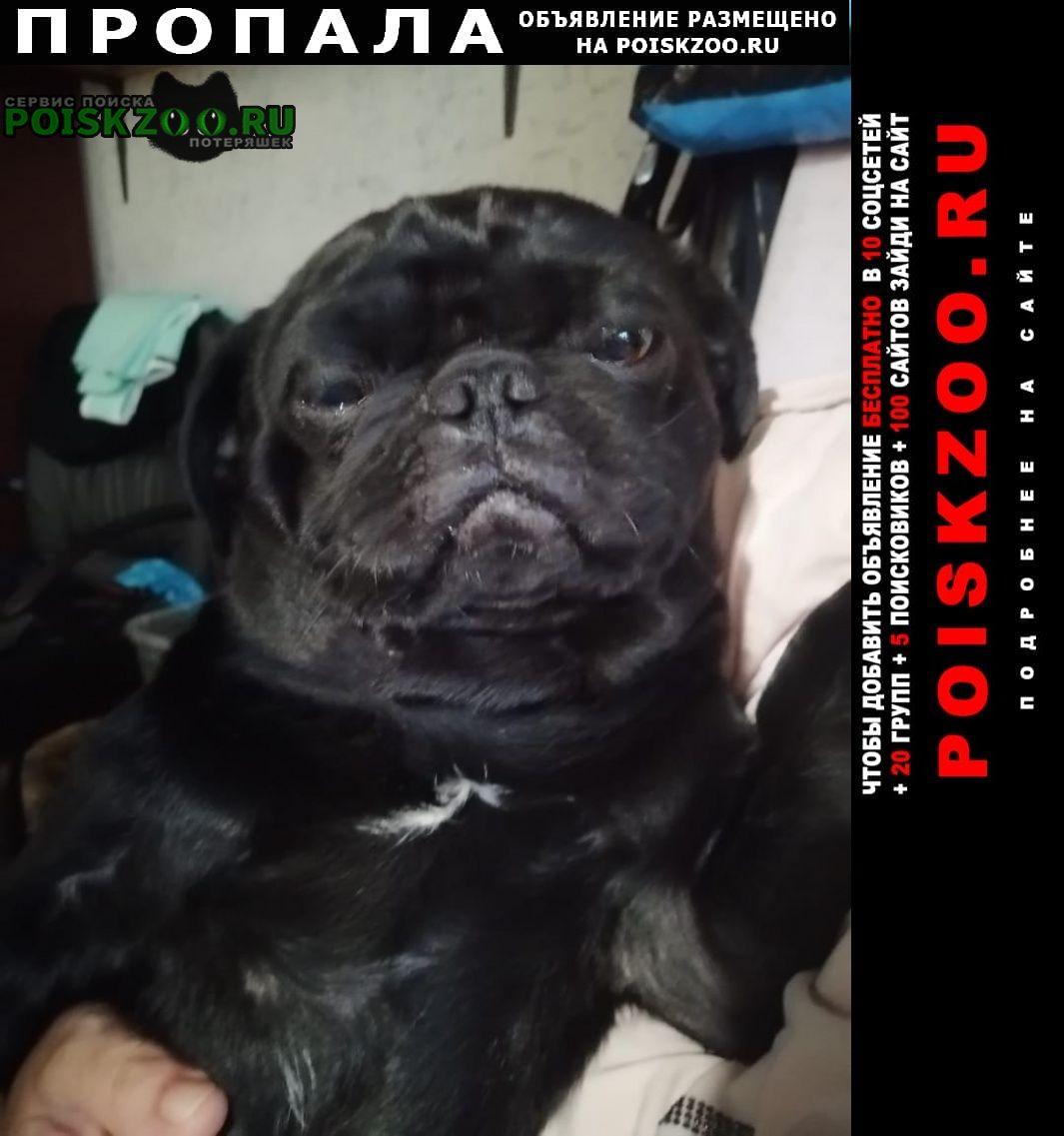 Пропала собака кобель чёрный мопс Москва