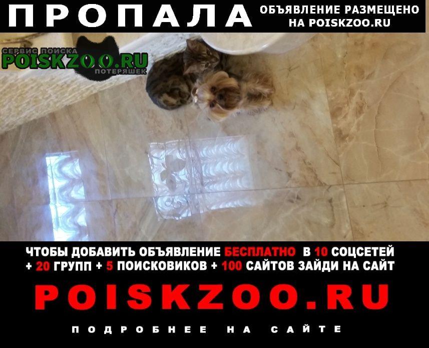 Пропала собака сегодня 20 июля в 10 часов Новороссийск