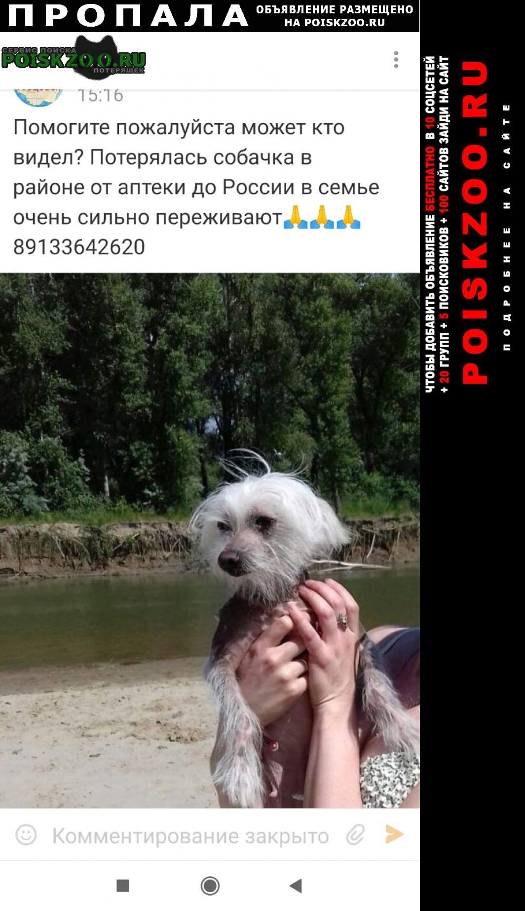 Пропала собака Рубцовск