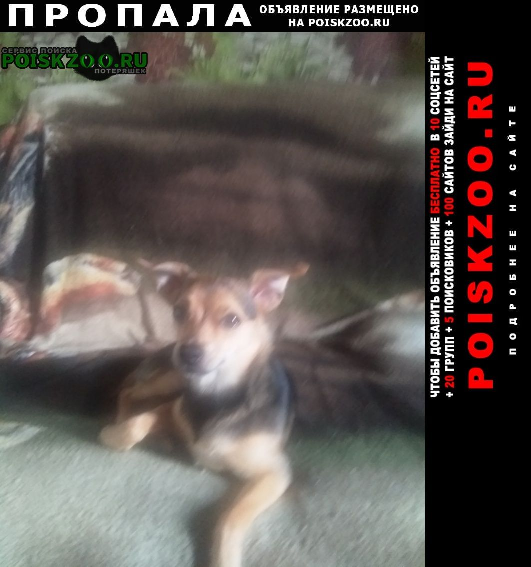 Пропала собака Майкоп (Адыгея)