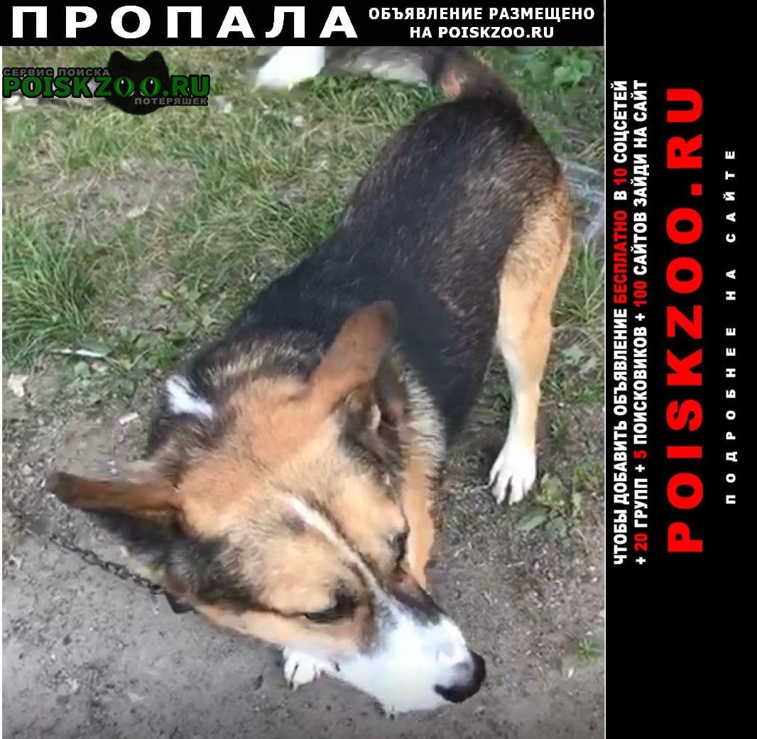 Пропала собака кобель Новосибирск